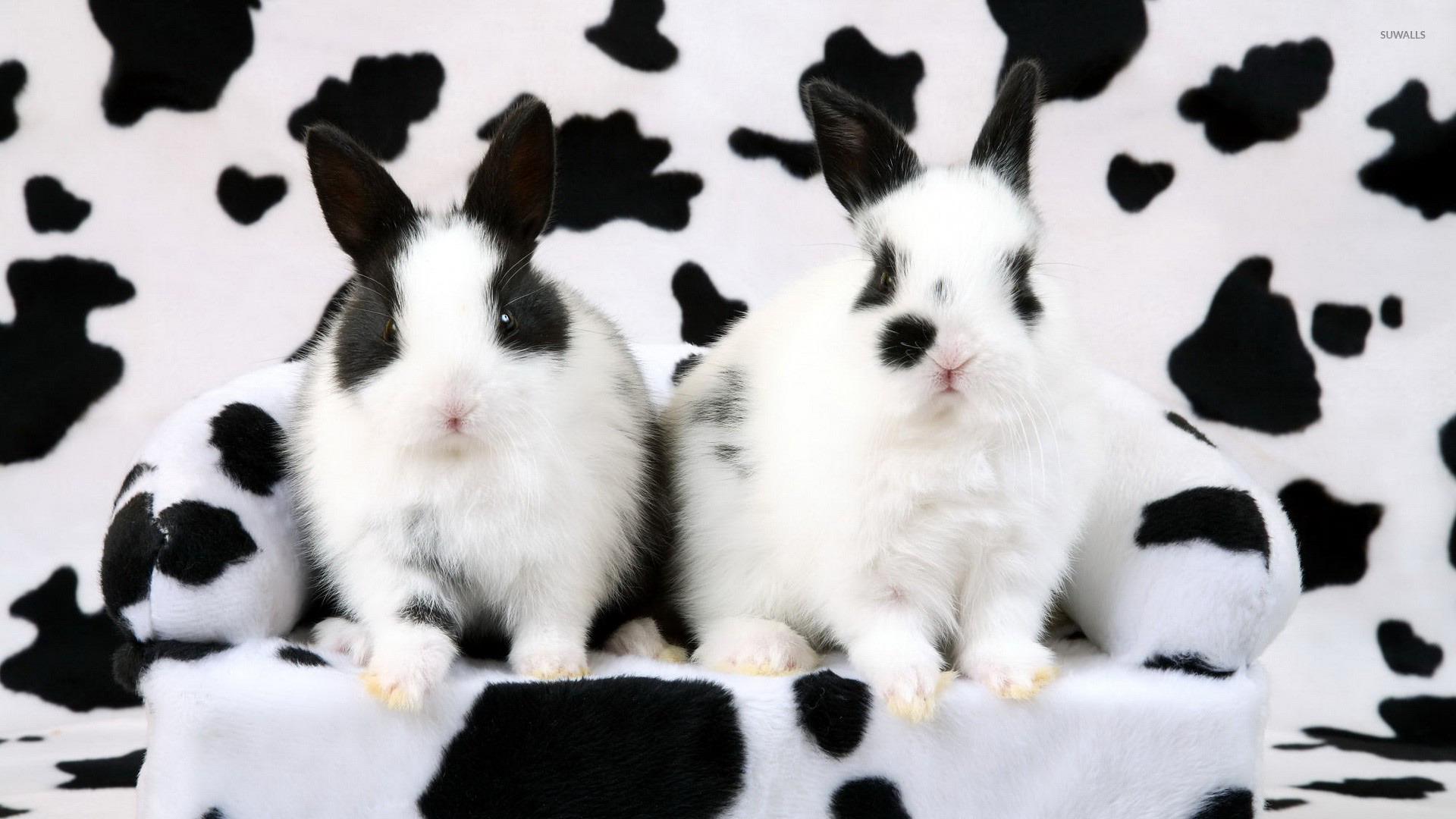Cute White Rabbit Wallpapers For Desktop Black And White Rabbits Wallpaper Animal Wallpapers 20876