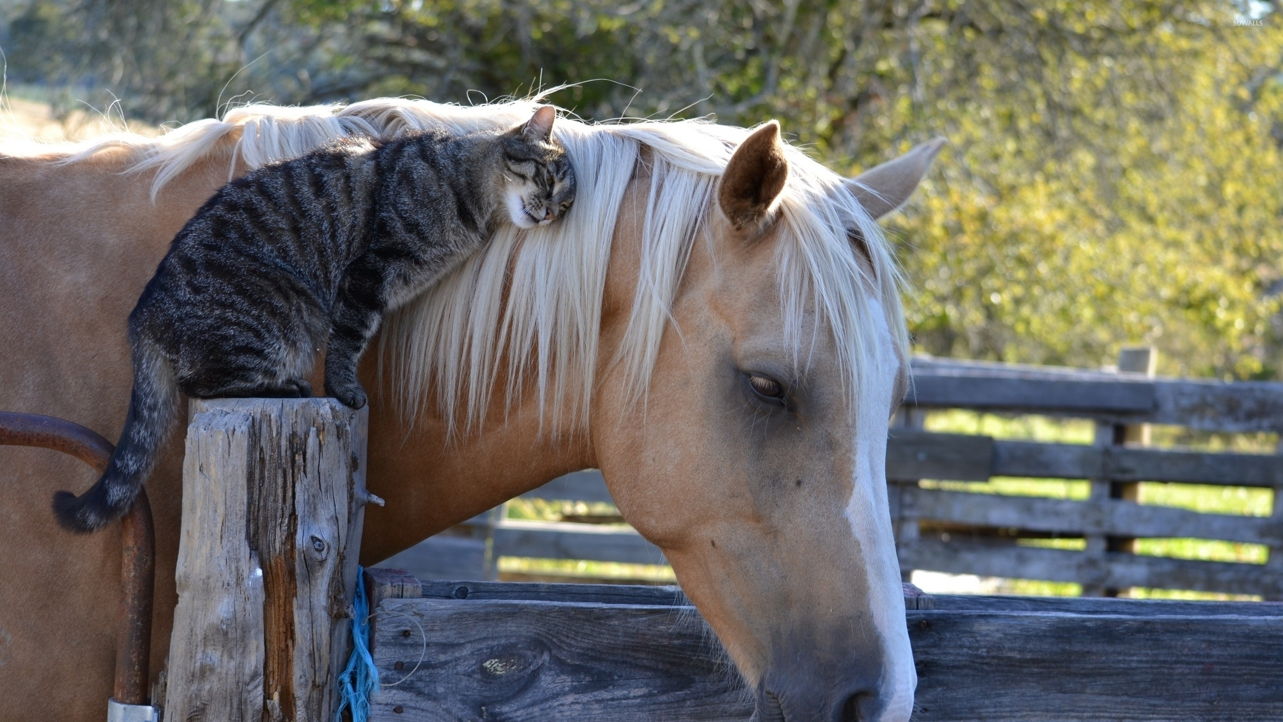 Horses In The Fall Wallpaper Cat Cuddling With A Horse Wallpaper Animal Wallpapers