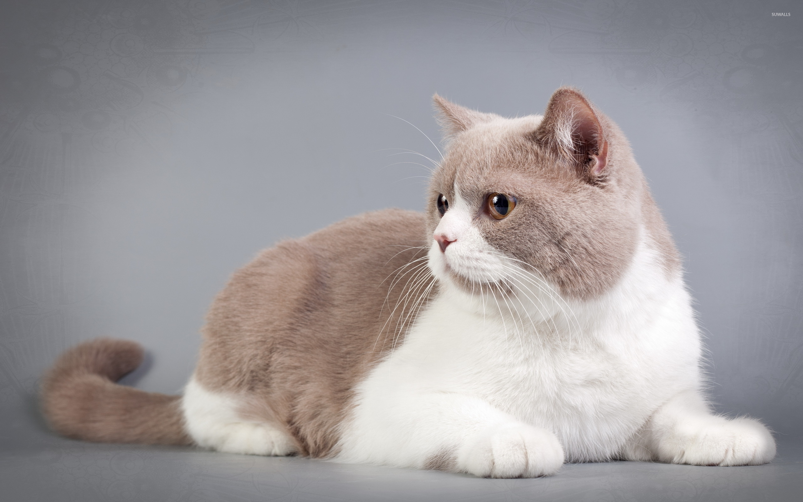 Cute Wallpapers Of Grumpy Cat Fat Cat Pictures To Pin On Pinterest Pinsdaddy
