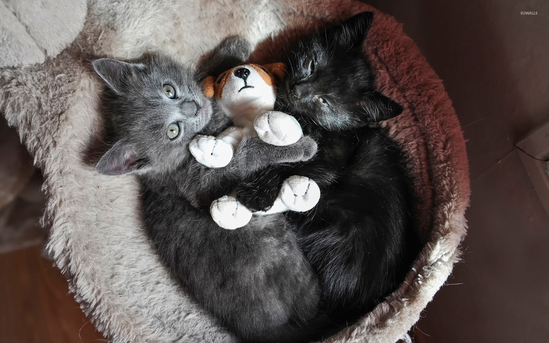 Free Funny Quotes Wallpapers For Desktop Kittens Playing With A Stuffed Puppy Wallpaper Animal