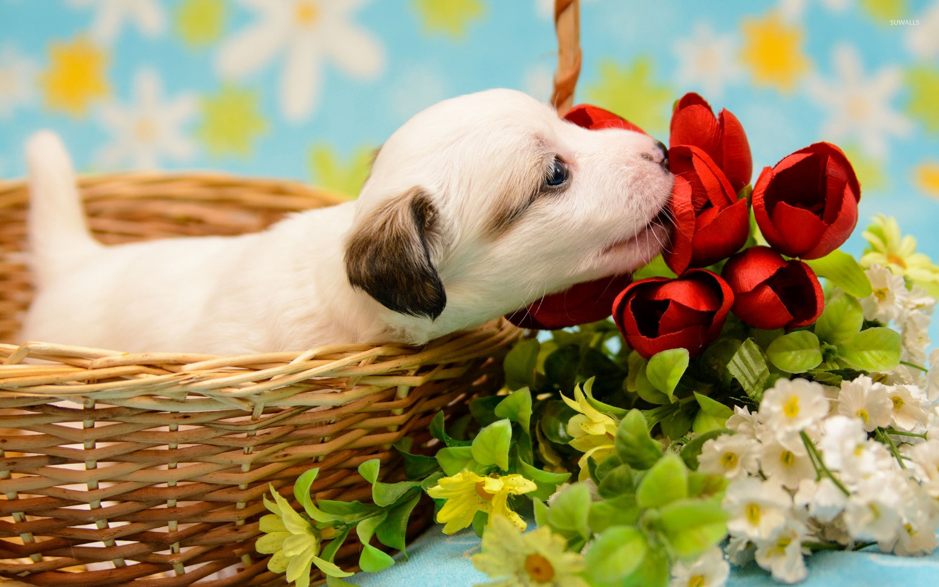 Cute Cats Wallpaper With Quotes Puppy Smelling The Red Tulips Wallpaper Animal