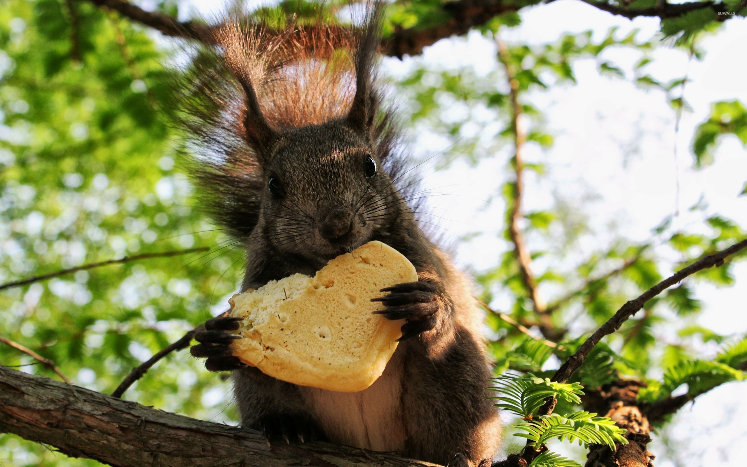 Cute Dog Baby Hd Wallpaper Squirrel Eating Bread On The Tree Wallpaper Animal