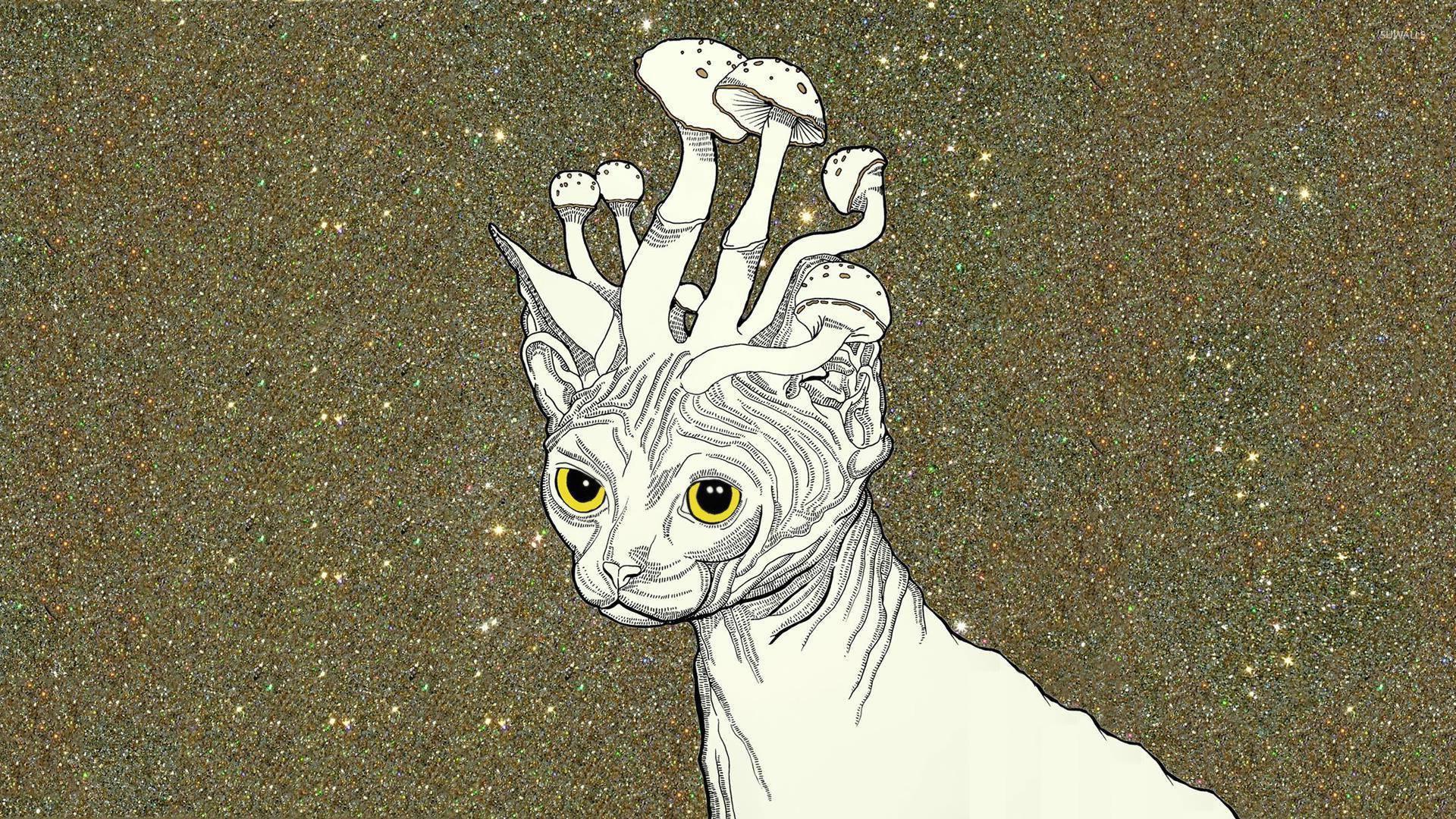 Cute Cartoon Hd Wallpapers Free Download Mushroom Headed Cat Wallpaper Artistic Wallpapers 16091