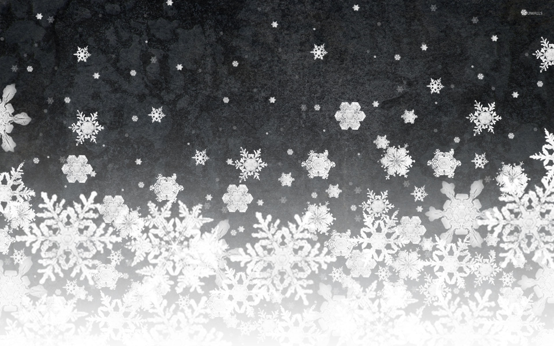 Snow Falling Wallpapers Free Download Snowflakes 5 Wallpaper Artistic Wallpapers 16243