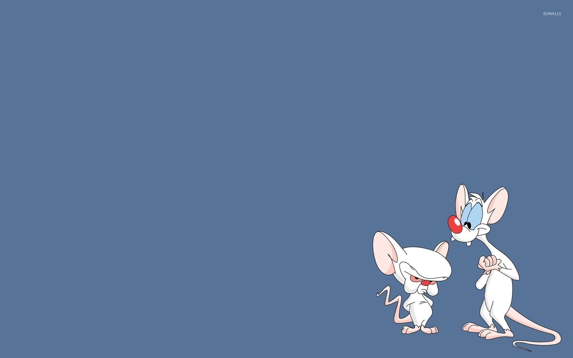 Minion Girl Wallpaper Pinky And Brain Pinky And The Brain Wallpaper Cartoon