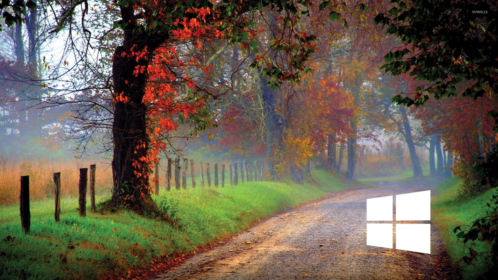 4k Laptop Wallpaper Fall Forest Windows 10 White Simple Logo On A Forest Path Wallpaper
