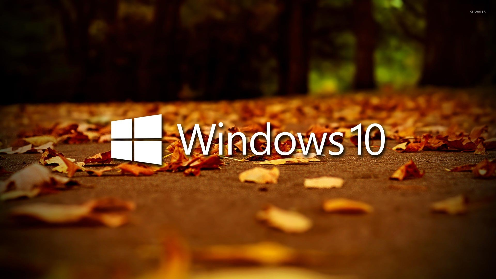 4k Laptop Wallpaper Fall Forest Windows 10 On Autumn Leaves 2 Wallpaper Computer