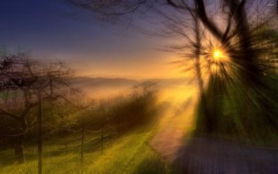 Sun Between Trees Wallpaper Landscape Nature (28 Wallpapers) – HD Wallpapers