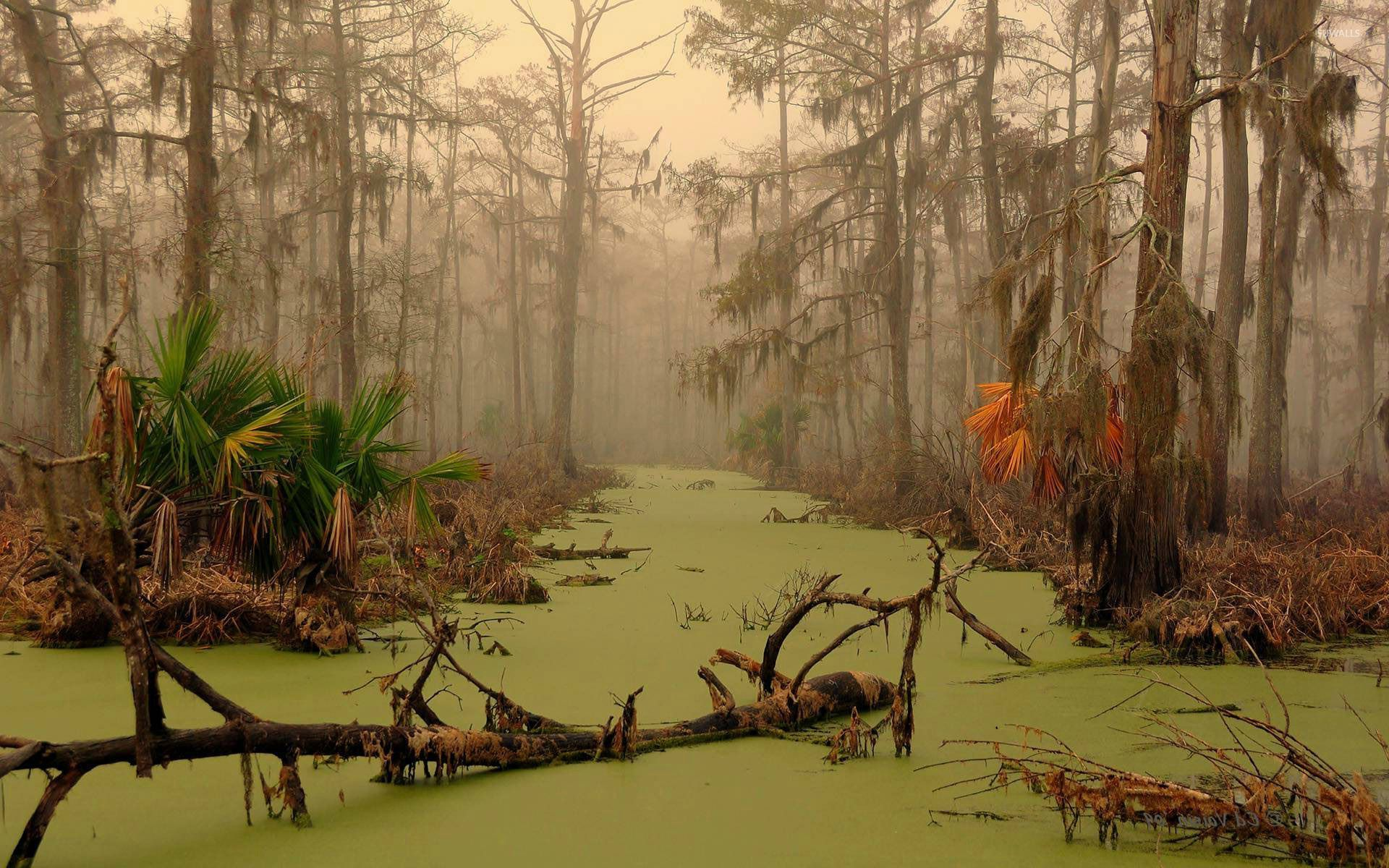 Funny Wallpaper Quotes Free Download Dagobah Louisiana Wallpaper Nature Wallpapers 29343