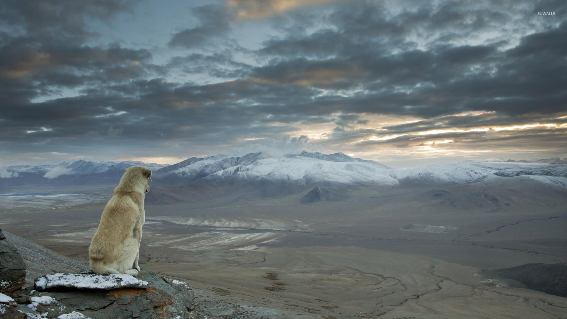 Fall Wallpaper Pc Dog Overlooking The Himalayas Wallpaper Nature
