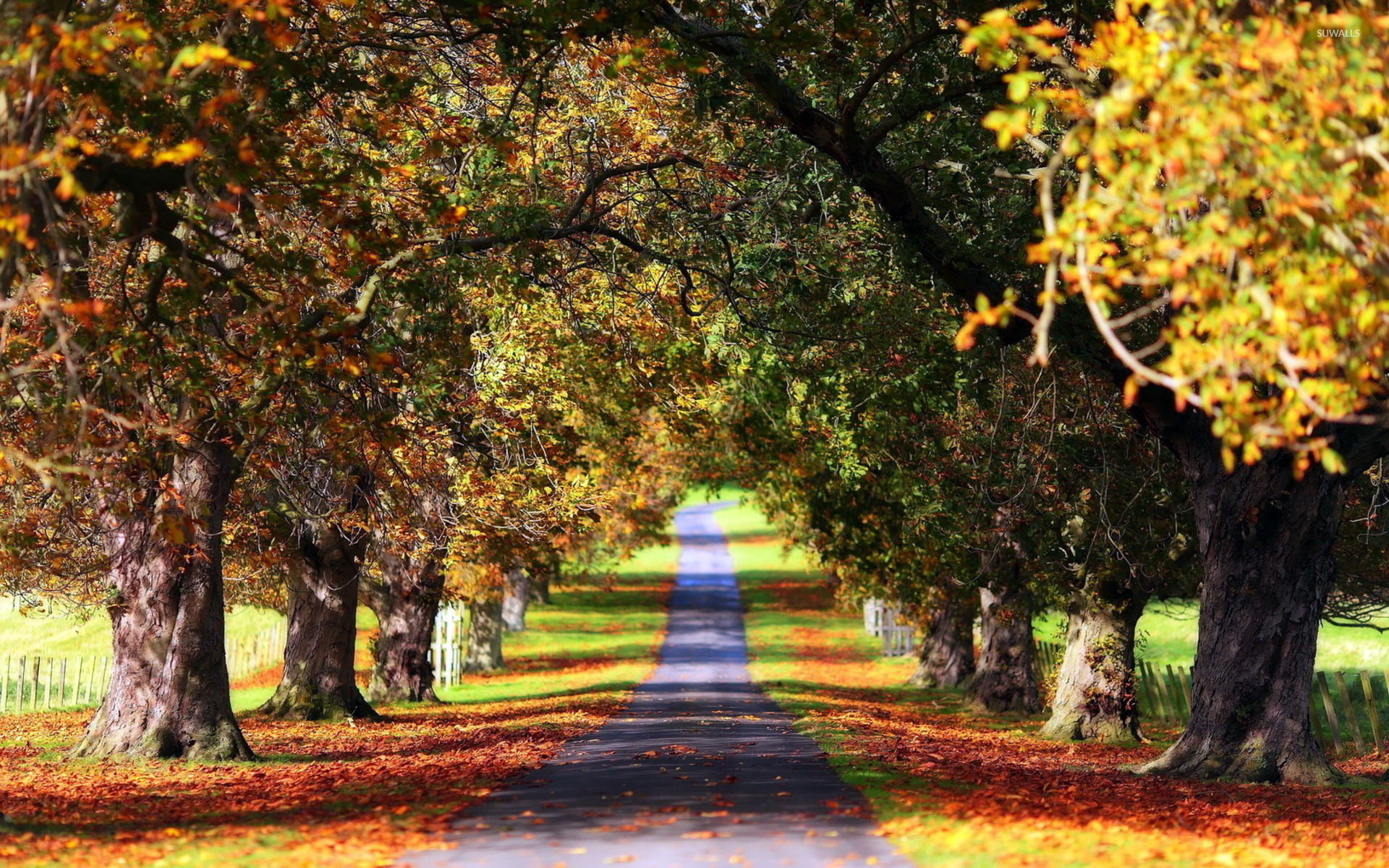 Fall Wallpaper For Windows 10 Path Between The Trees Wallpaper Nature Wallpapers 15630
