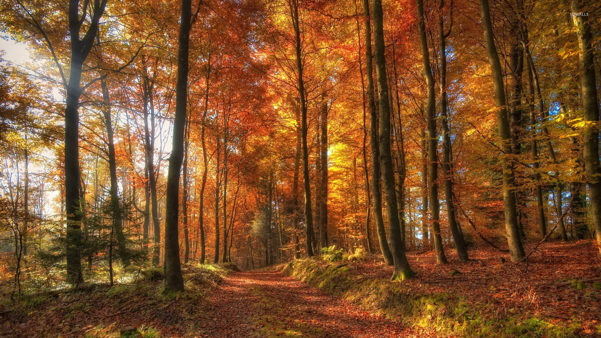 Free Fall Wallpaper Downloads Path In The Forest Wallpaper Nature Wallpapers 15174