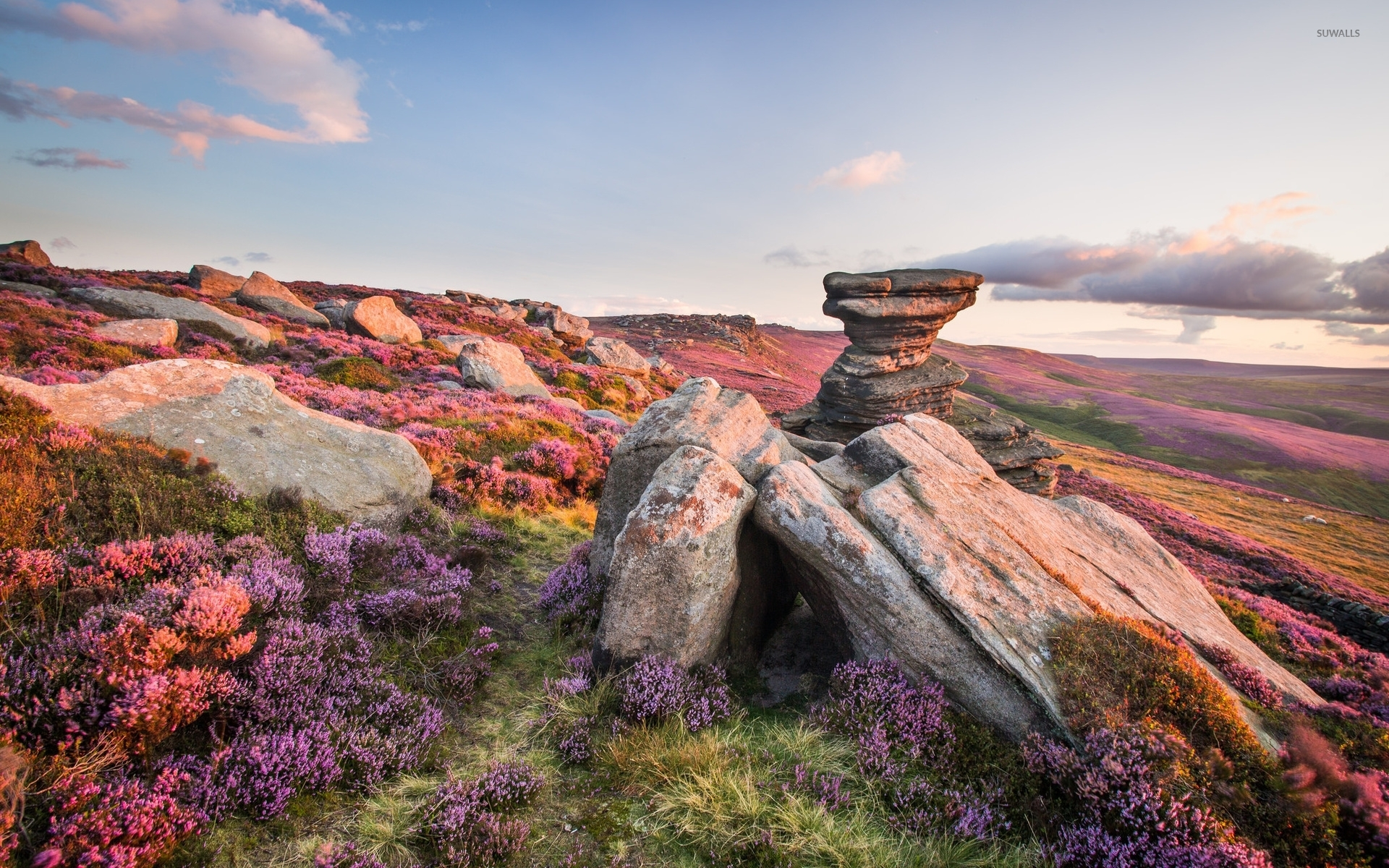 Rocky Wallpaper With Quotes Purple Flowers On The Rocky Mountain Wallpaper Nature