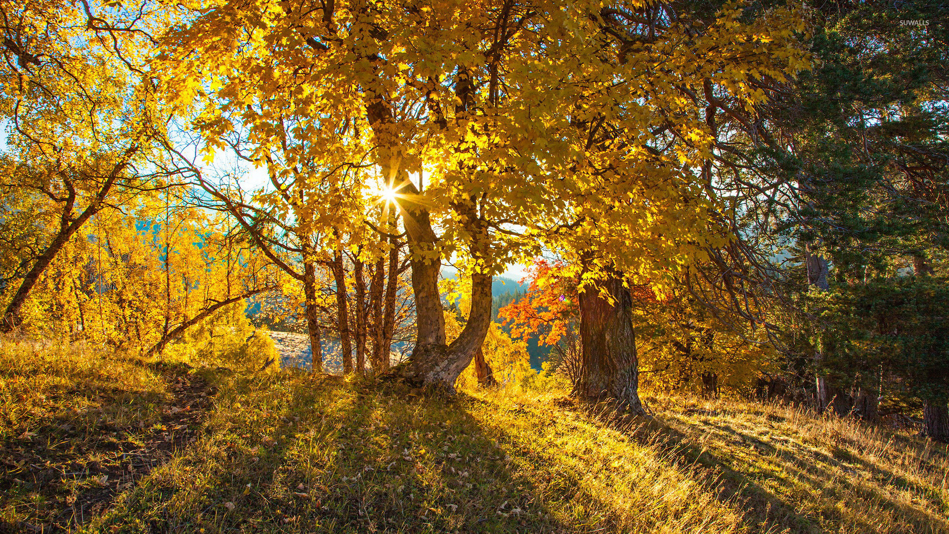 Fall Autumn Hd Wallpaper 1920x1080 Free Sun Light Through The Trees Wallpaper Nature Wallpapers