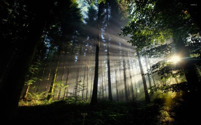 Sun shining through the forest wallpaper - Nature wallpapers - #14791