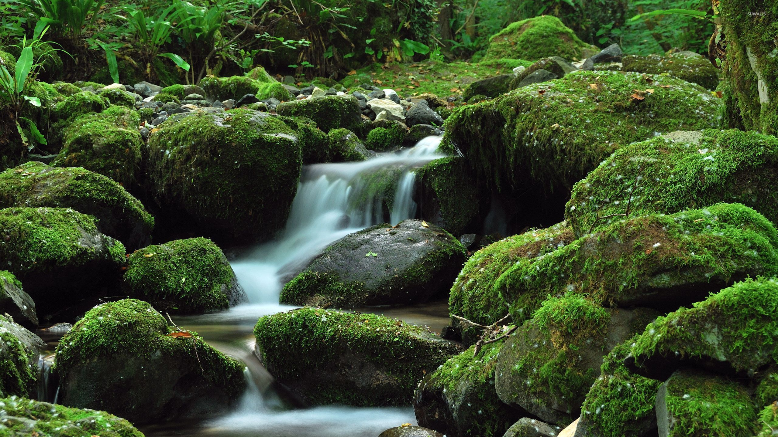 Snow Falling Wallpapers Free Download Water Falling Through The Mossy Rock Wallpaper Nature