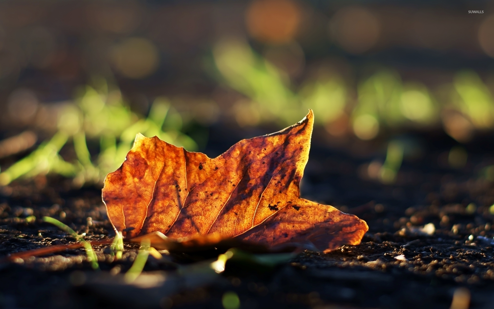 Fall Leaves Desktop Wallpaper Free Autumn Leaf On The Ground Wallpaper Photography