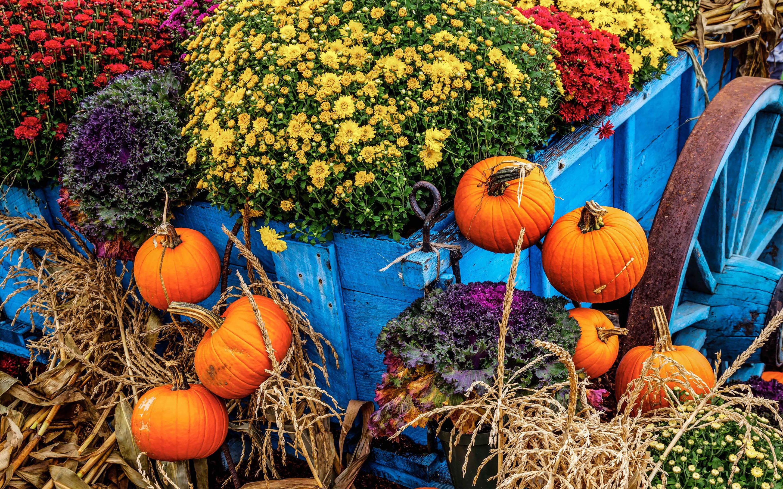 Fall Pumpkin Wallpaper Hd Farmer S Market Wallpaper Photography Wallpapers 23805