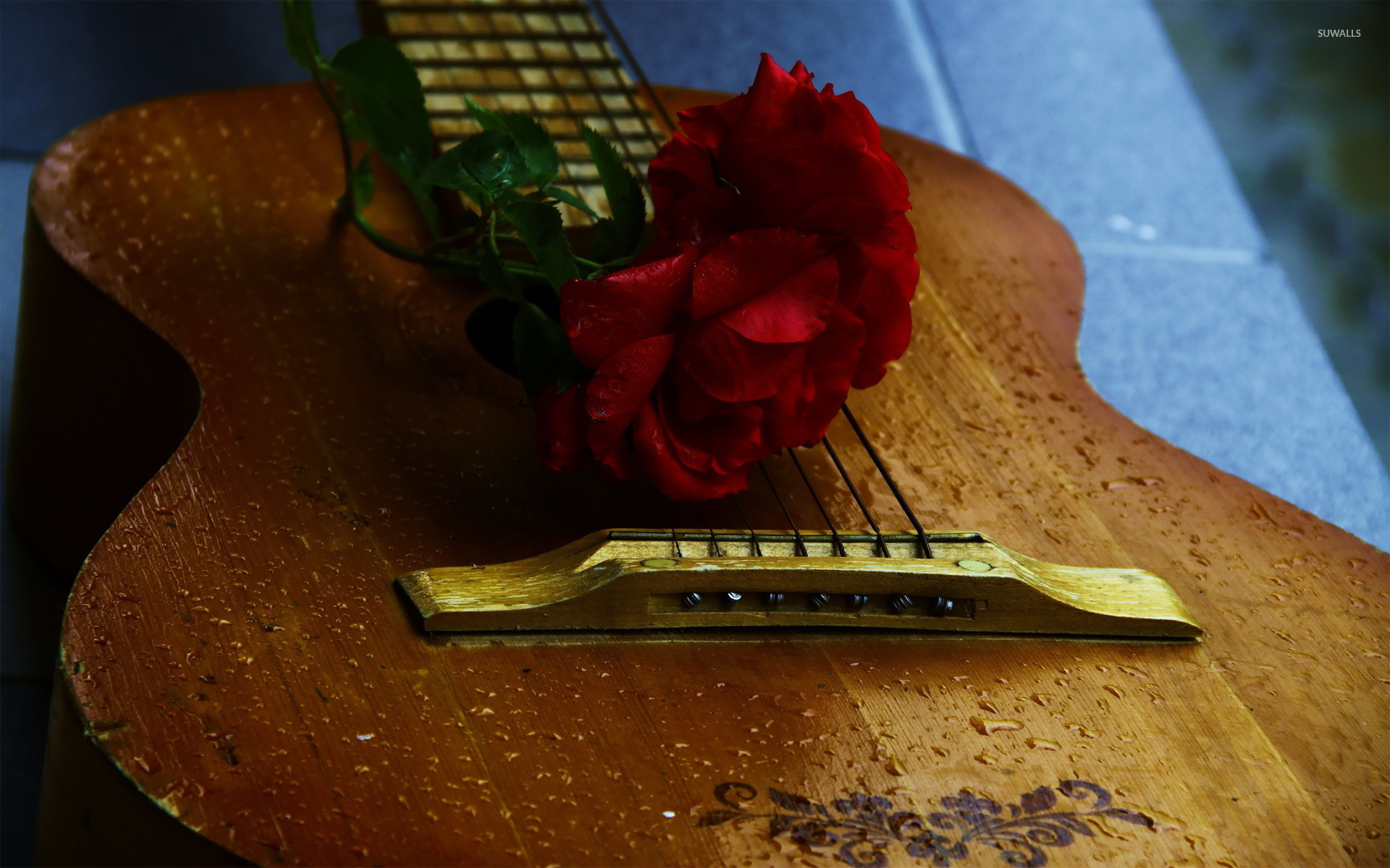 Music Quotes Wallpaper Guitar Rose On A Guitar Wallpaper Photography Wallpapers 17124