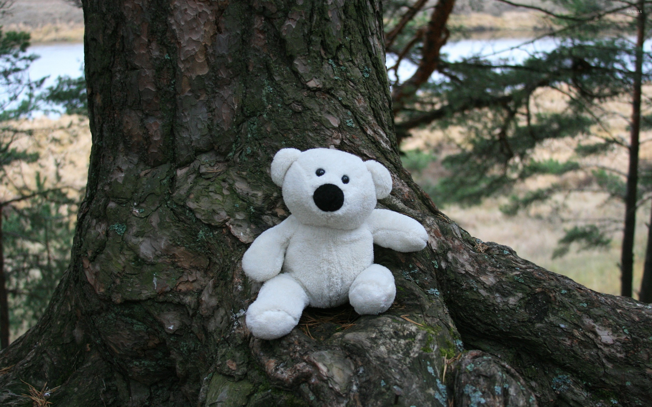 Sad Alone Quotes Hd Wallpaper White Teddy Bear On A Tree Wallpaper Photography