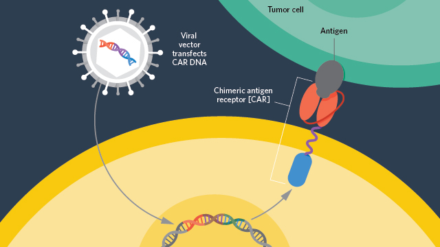Gilead to Pay Nearly $12B for CAR T-Cell Company The Scientist