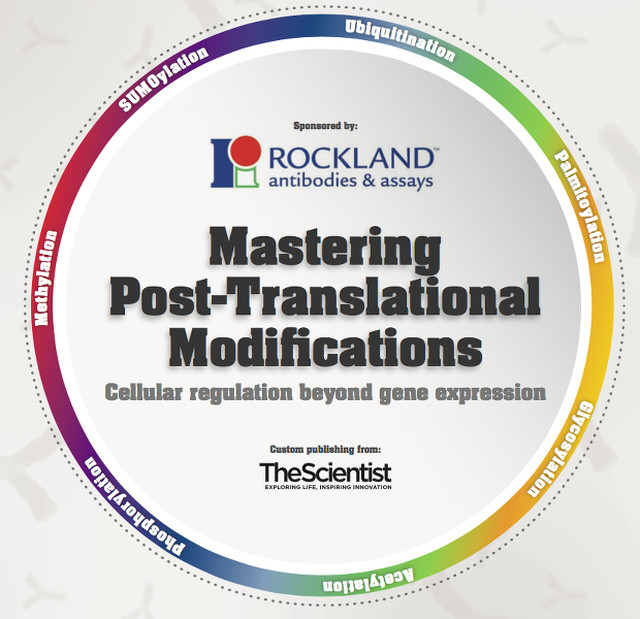 Mastering Post-Translational Modifications The Scientist Magazine®