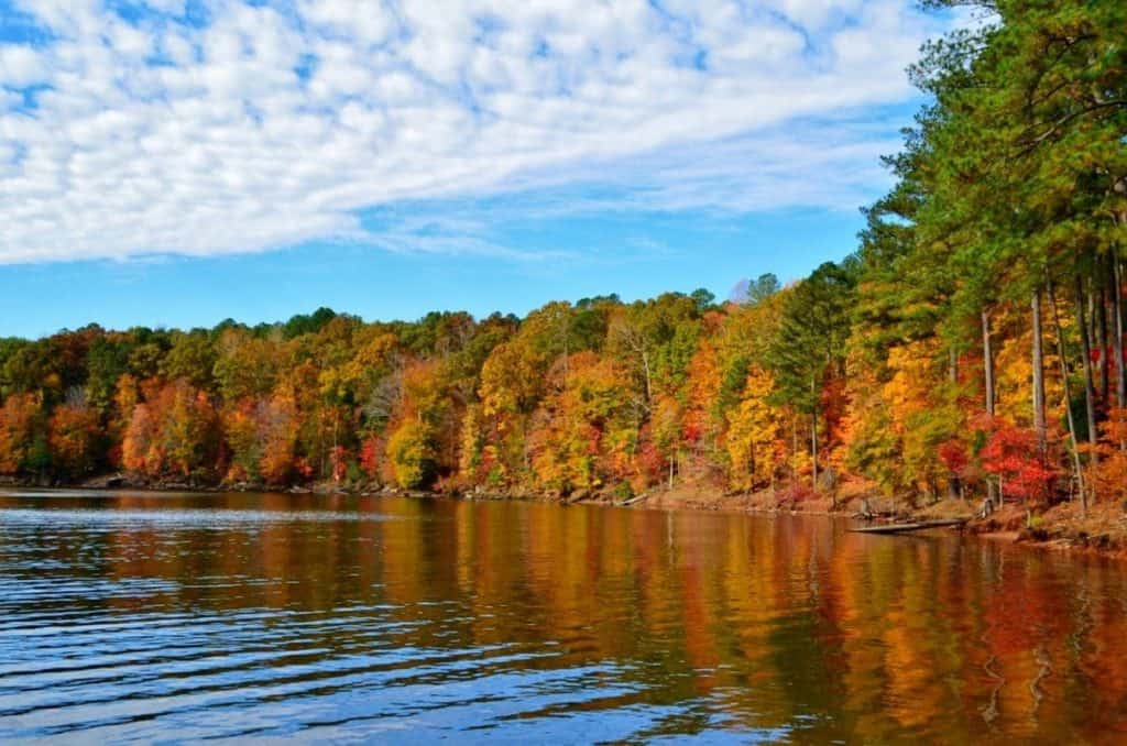Hd Wallpaper Fall Leaves 15 Best Things To Do In Durham Nc Page 13 Of 15 The