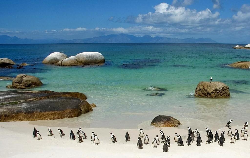 Boulders Beach, Cape Town © 一元 马 / Flickr