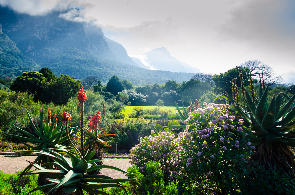 Garden Ideas For Around The Pool 13 Free And Cheap Date Ideas To Try In Cape Town