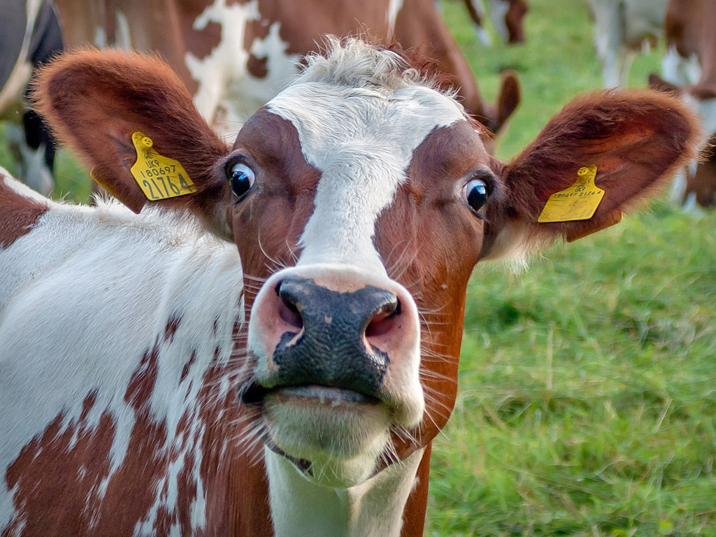 Animal Face Wallpaper Putin S Missiles Take Out Terrorist Iranian Cows The