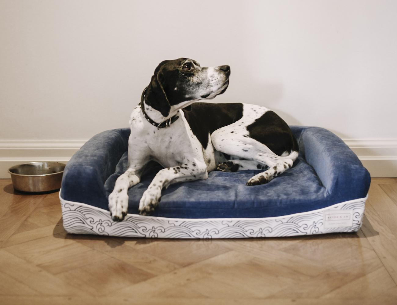 Best Bed In The World The World 39s Best Dog Bed By Ralph And Co Gadget Flow
