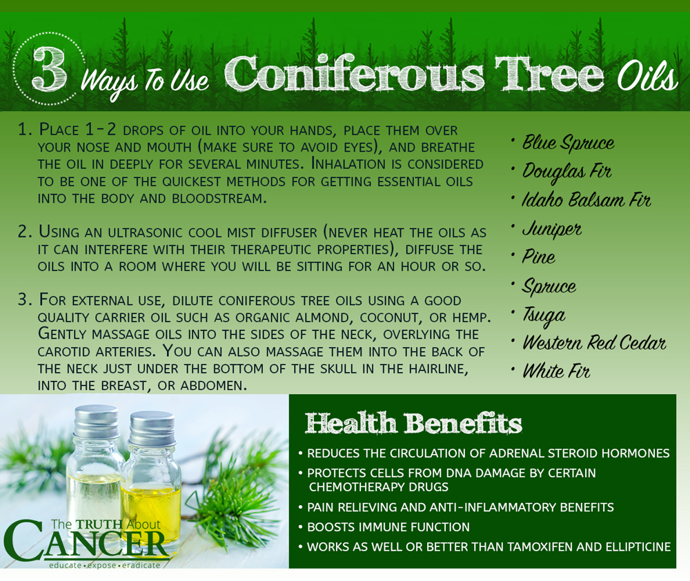 Thuja Y Cancer Cancer Fighting Phytochemicals In Coniferous Tree Essential Oils
