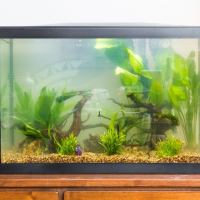 tall narrow fish tanks - Tall Fish Tanks Aquariums