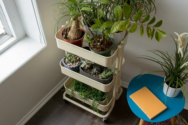 Ikea House Plants Houseplant Starter Kit: Reviews By Wirecutter | A New York