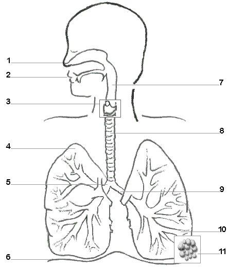 singing diagram