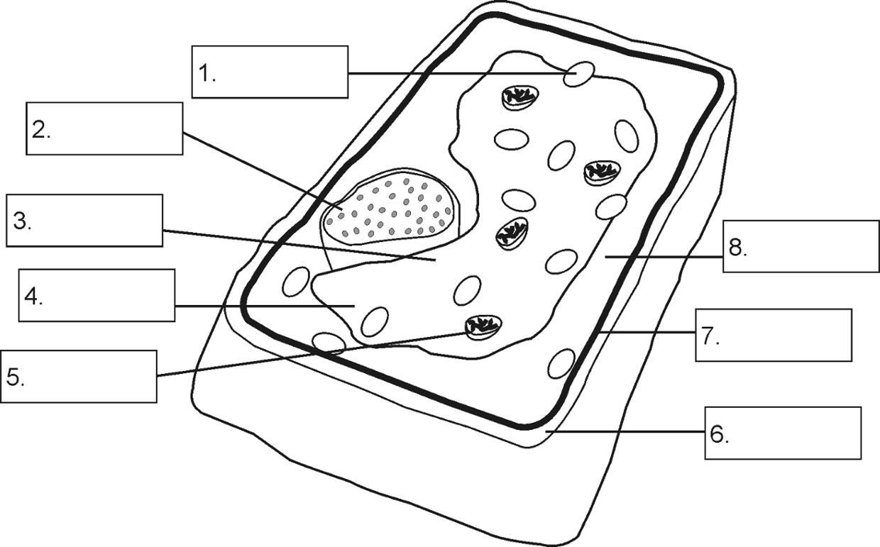 cheek cell diagram labeled simple