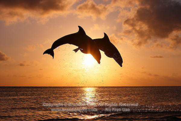 3d Love Wallpapers For Mobile For Touch Screen Free Download Sunset Dolphins