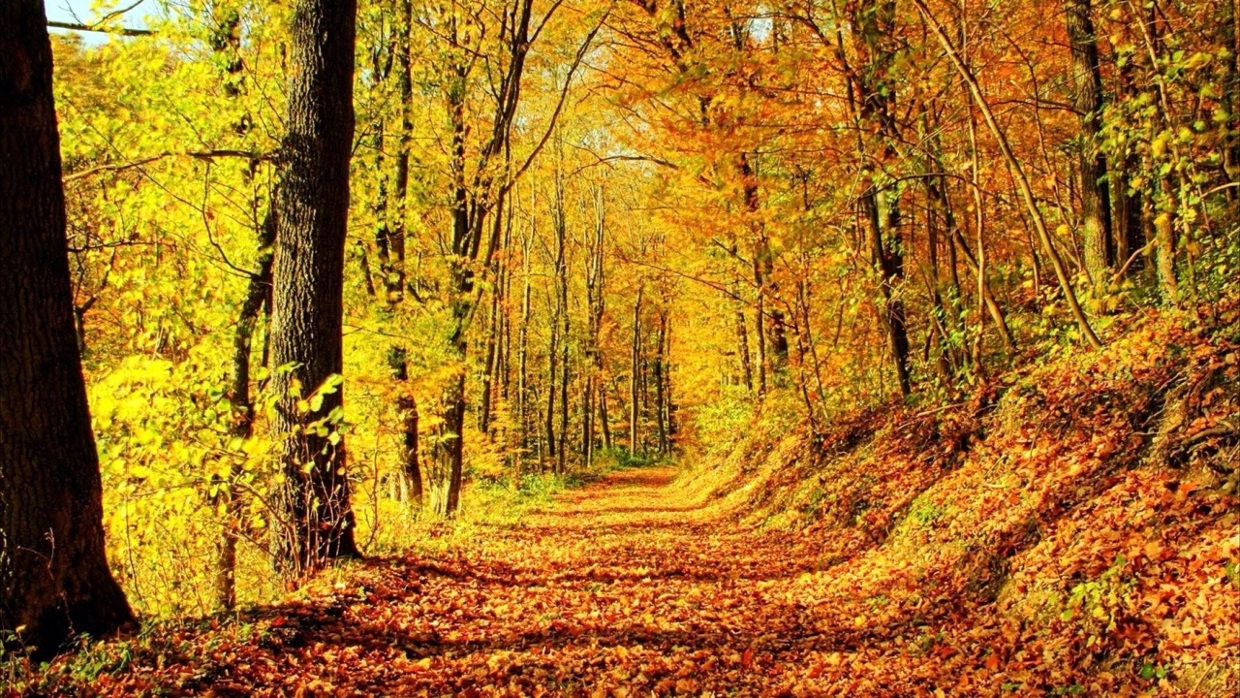 Michigan Fall Colors Wallpaper Grant And Alex Temperate Deciduous Forest Thinglink