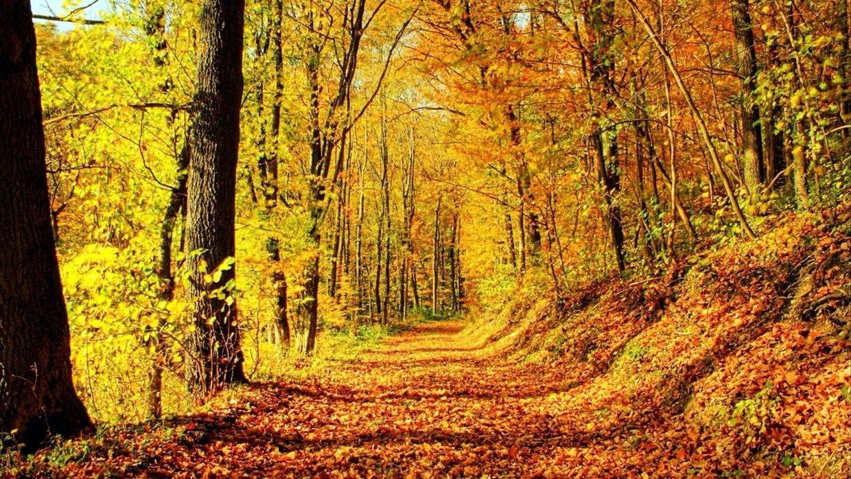 4k Fall Michigan Wallpaper Grant And Alex Temperate Deciduous Forest