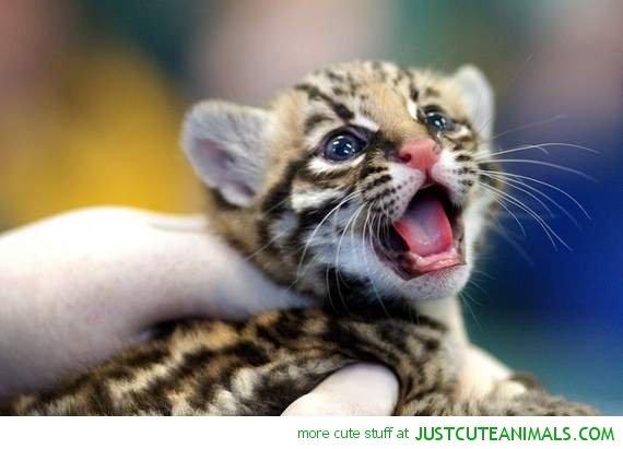 Cute Christmas Kitten Wallpaper Leopard Baby