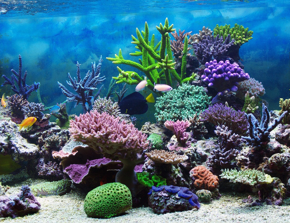 Interactive 3d Aquarium Live Wallpaper Coral Reefs By Kylie And Natalie Thinglink