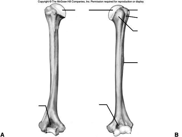 diagram of a bone
