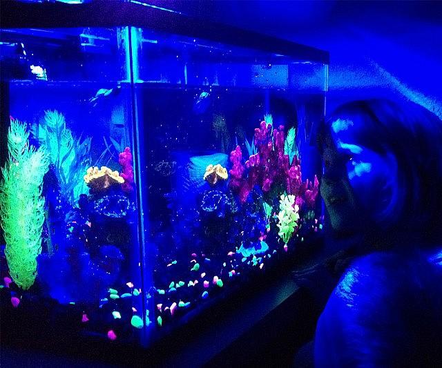Seahorse Hd Wallpaper Glow In The Dark Aquarium