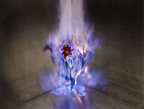 Black Flower Wallpaper Flaming Flower Photography Love Letters By Jiang Zhi
