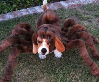 Spider Dog Costumes : spider dog