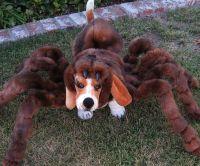 Spider Dog Costumes : spider dog