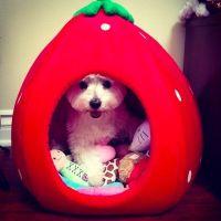 Hollowed Fruit Pet Beds : Strawberry Pet Bed