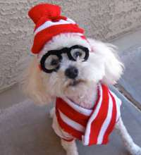 Disguising Doggy Costumes : Where's Waldo dog costume