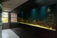 Amazing Built-In Aquariums in Interior Design