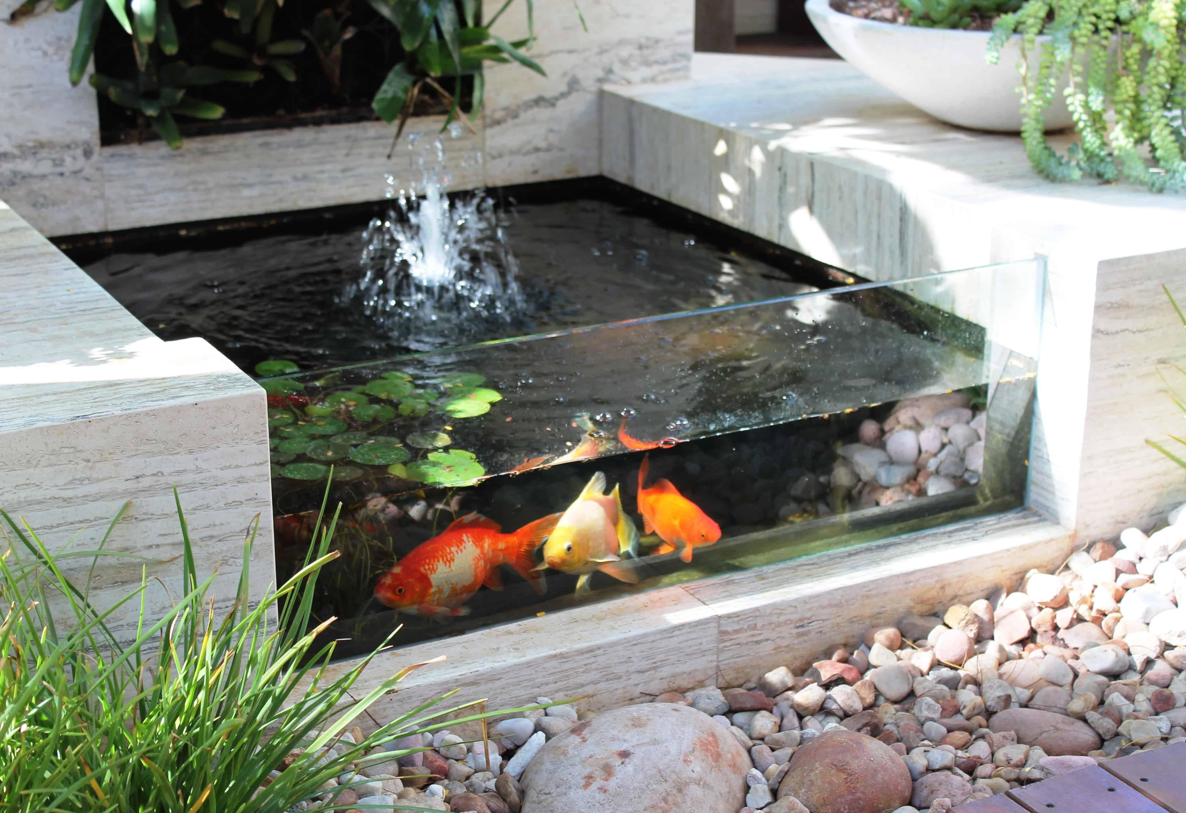 Fullsize Of Indoor Koi Pond
